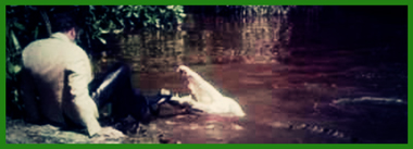 Sighitng-James-Bond-Crocodile-Live-Let-Die-River-Thames-London-Telegraph-Roger-Moore-x380